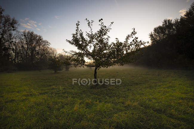 Germania, Assia, mattina presto al Kuehkopf Nature Reserve — Foto stock
