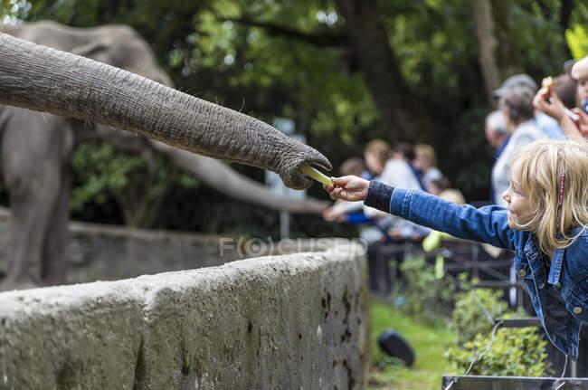 D'alimentazione dell'elefante nel giardino zoologico della bambina — Foto stock