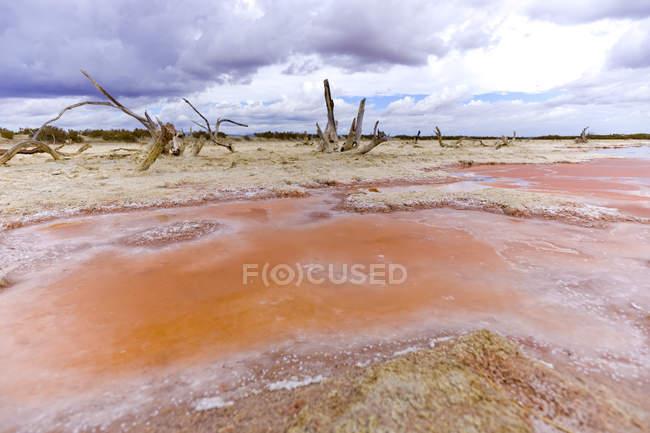 Espagne, Mallorca, Saline, Strandes Es Trenc, sel de mine et les arbres morts — Photo de stock