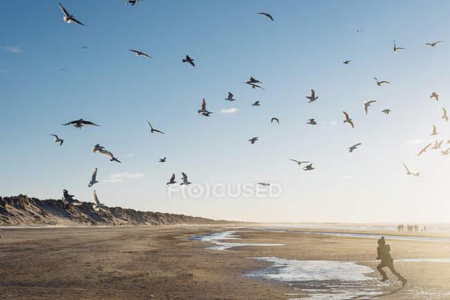 Denmark, Blokhus, boy chasing flock of seagulls on beach — Stock Photo