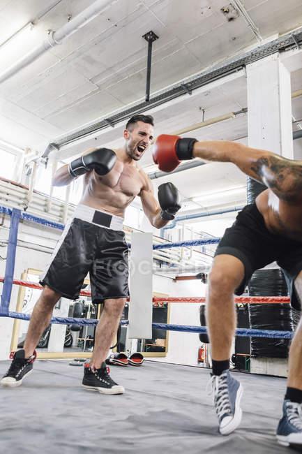 Kaukasische Boxer Gegner umzuwerfen — Stockfoto