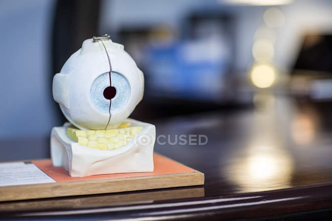 Closeup view of sectional eyeball model — Stock Photo