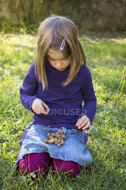 Маленькая девочка собирает фундук на коленях — стоковое фото