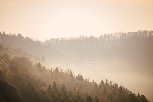 Allemagne, Forêt Noire à la brume du matin — Photo de stock