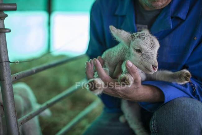 Uomo che tiene agnellino in fattoria — Foto stock