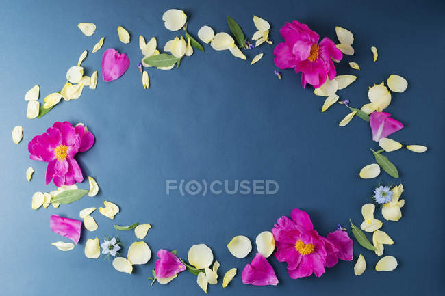 Sage leaves with peony and rose petals shaping an oval — Stock Photo