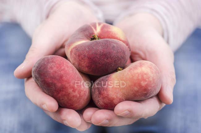 Mani femminili della holding pesche piatte — Foto stock
