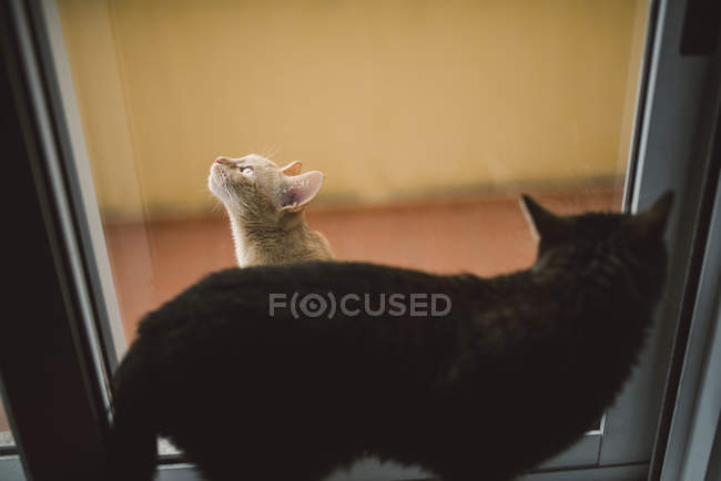 Two cats separated by a window — Stock Photo