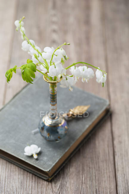 White lyre-flowers in a vase — Stock Photo
