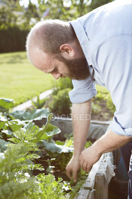 Young man working in garden — Stock Photo