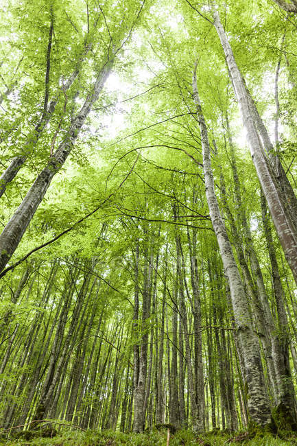 Birch forest during daytime — Stock Photo