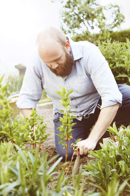 Young man working in garden, sowing plants — Stock Photo