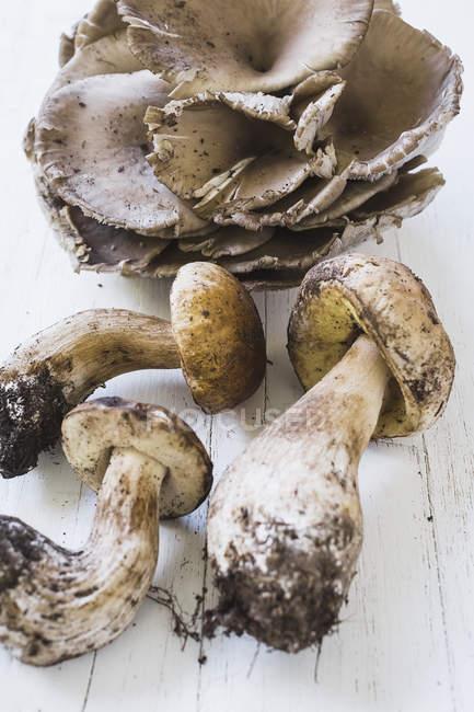 Pilze auf weißem Holz — Stockfoto