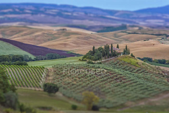 Italy, Tuscany, Val d'Orcia, Podere Belvedere farmhouse,  tilt-shift effect — Stock Photo