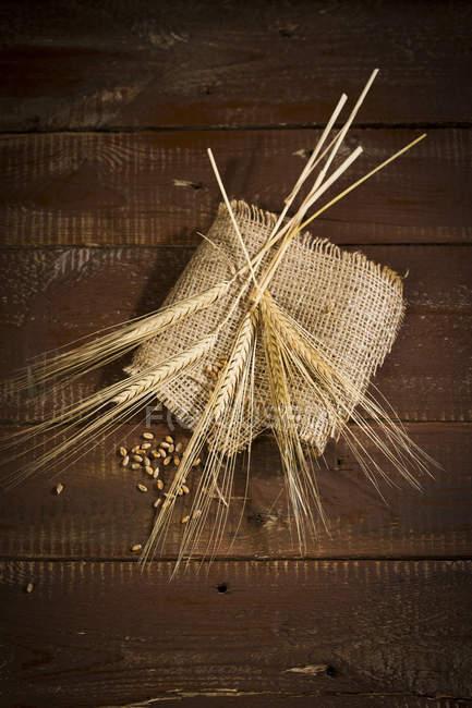 Ears of barley on sackcloth — Stock Photo