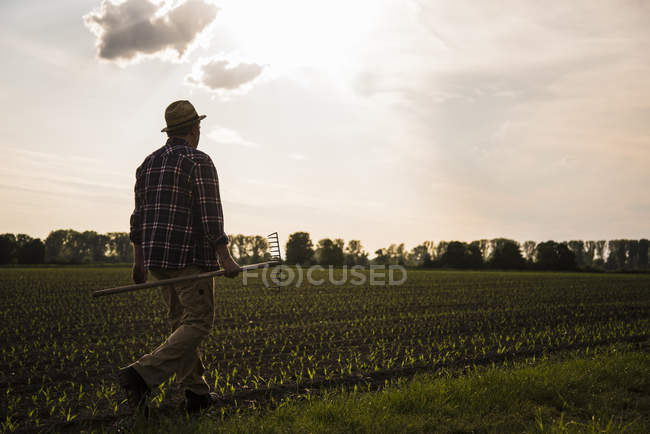 Agricultor caminhando com ancinho ao longo de um campo — Fotografia de Stock