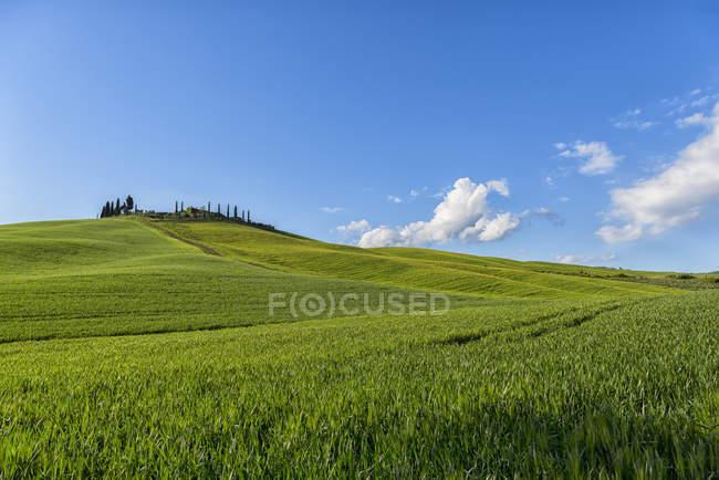 Italien, Toskana, Val d 'orcia, Bauernhaus und Felder im Frühling — Stockfoto