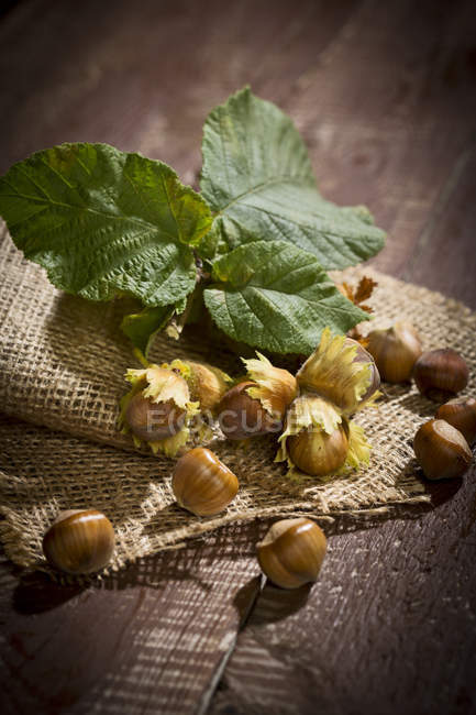Close up of Hazelnuts and leaves on jute — Stock Photo