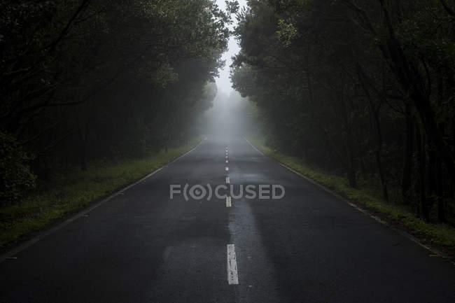 Порожній сільська дорога в тумані — стокове фото