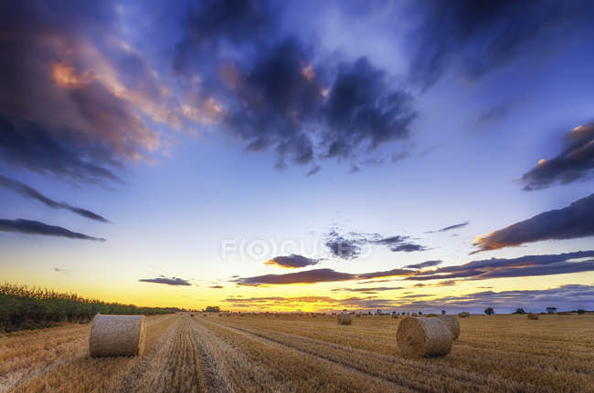 Шотландия, Восточный Лотиан, тюки сена на поле на закате — стоковое фото