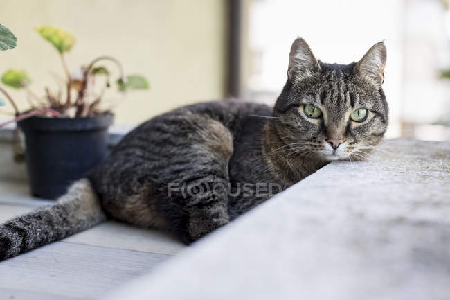 Tabby cat on terrace — Stock Photo