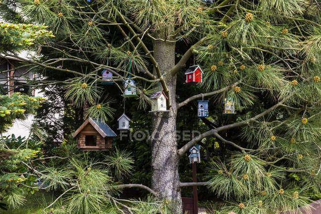 Birdhouses hanging in a tree outdoor — Stock Photo