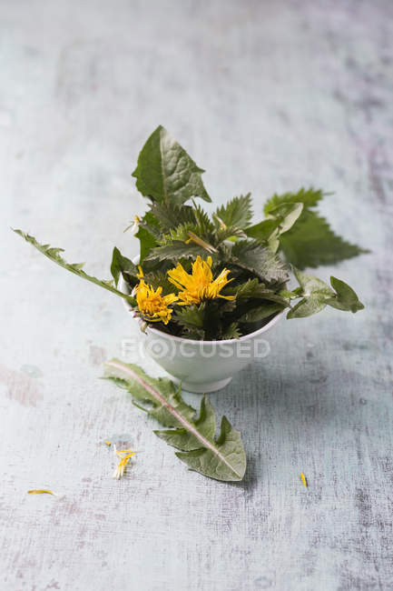 Чаша из крапивы с листьями и цветками одуванчика — стоковое фото