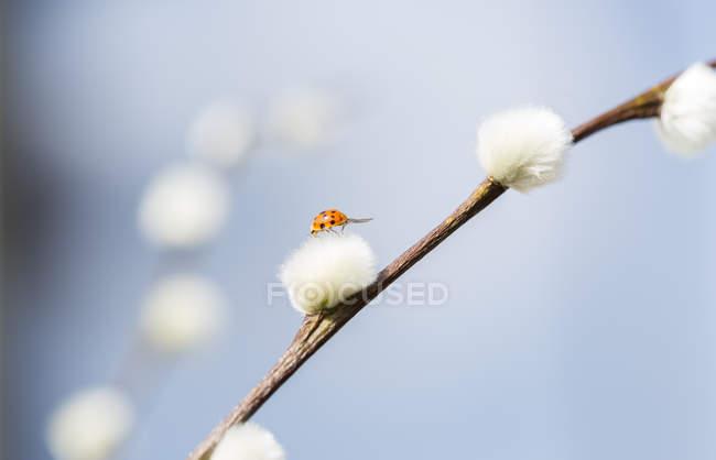 Закройте вид на ветку ивы с птицей-лягушкой — стоковое фото