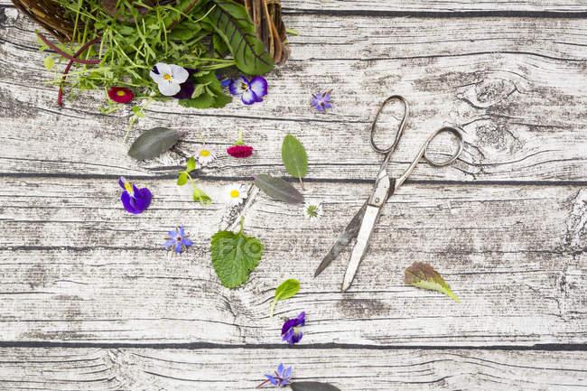 Fines herbes et fleurs comestibles — Photo de stock