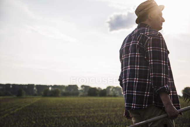 Фермер держит грабли рядом с полем — стоковое фото