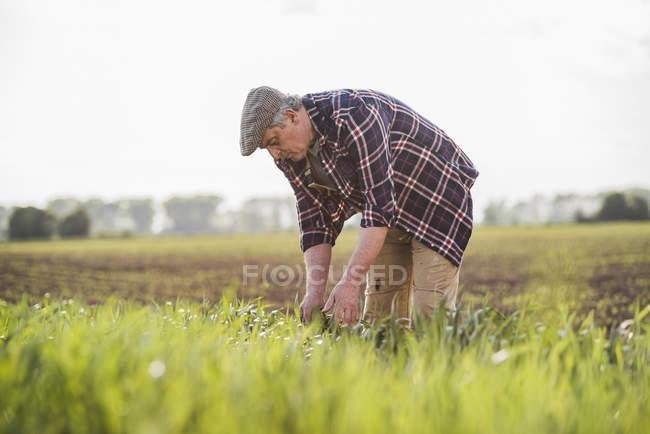 Bauer bei der Arbeit auf einem Feld — Stockfoto
