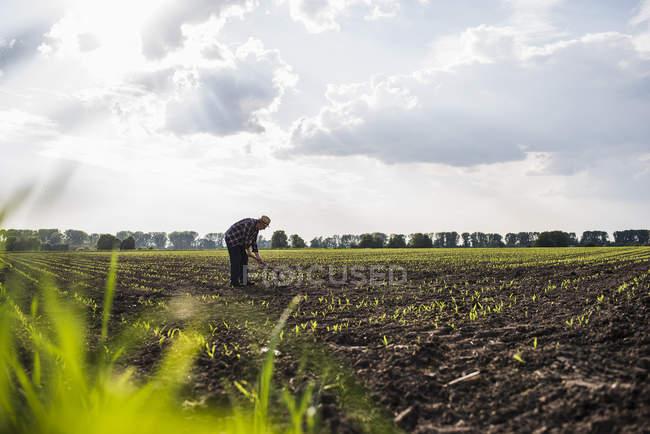 Фермер работает в поле — стоковое фото