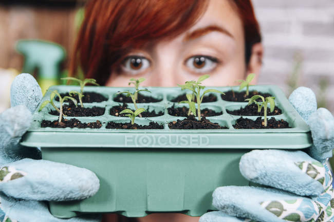 Jeune femme tenant un récipient avec des semis de tomate, gros plan — Photo de stock