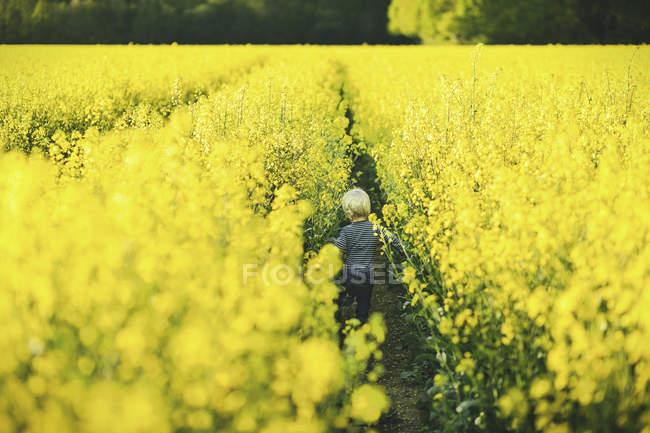 Маленький хлопчик у жовтий каноли поля, заднього виду — стокове фото
