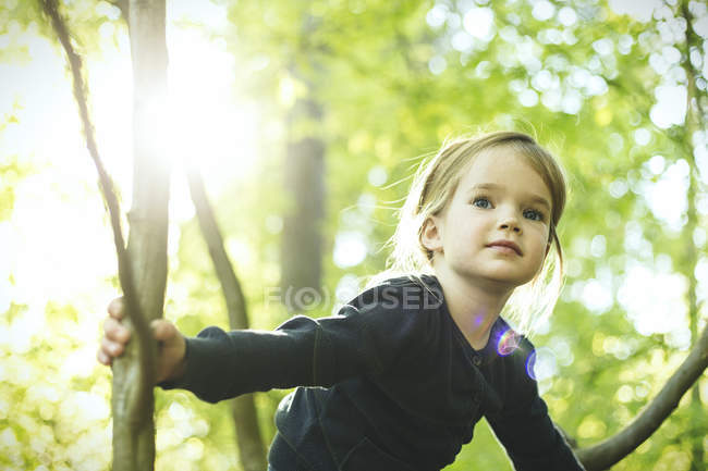 Девушка в лесу забирается на дерево — стоковое фото