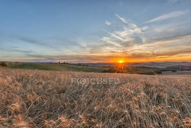 Italie, Toscane, Val d'Orcia, Champs au coucher du soleil — Photo de stock