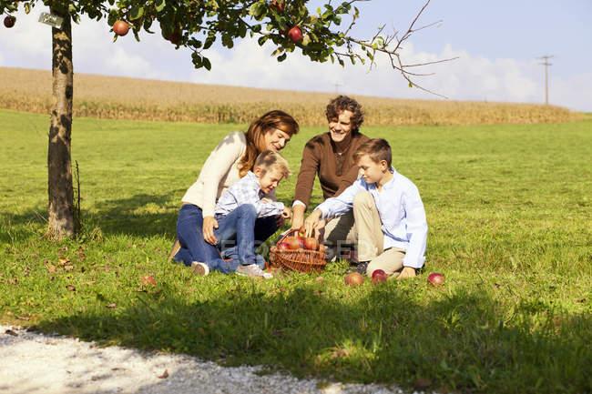 Famille récolte pommes sur pré rural — Photo de stock