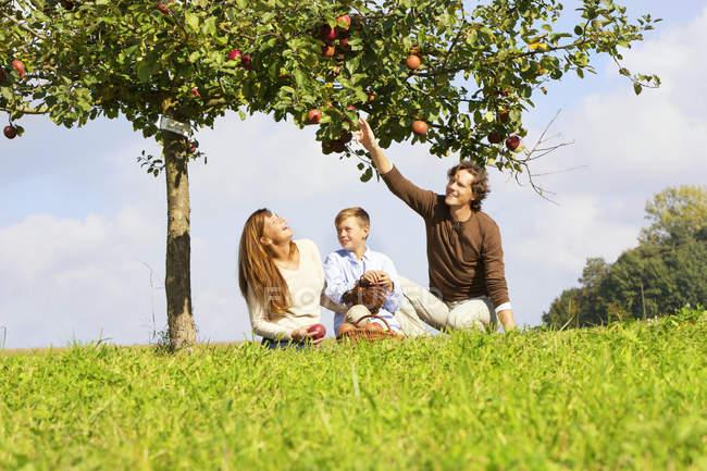 Maçãs de colheita familiar no prado rural — Fotografia de Stock