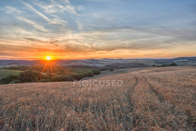 Italy, Tuscany, Val d'Orcia, Fields at sunset — Stock Photo