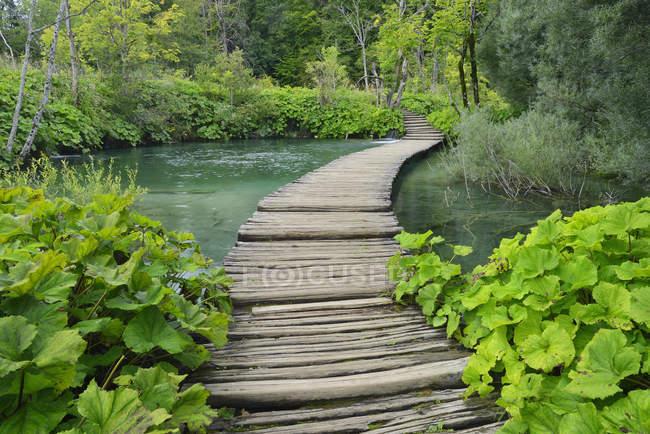 Croacia, Karlovac, Wodden paseo marítimo en el Parque Nacional de los Lagos de Plitvice - foto de stock
