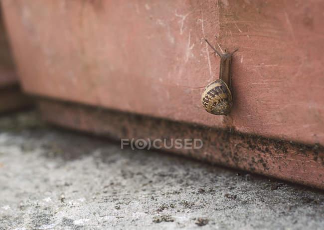 Lumaca strisciando verso l'alto dalla pentola di argilla — Foto stock