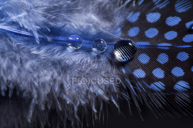 Blue feather and water drops, close-up — Stock Photo