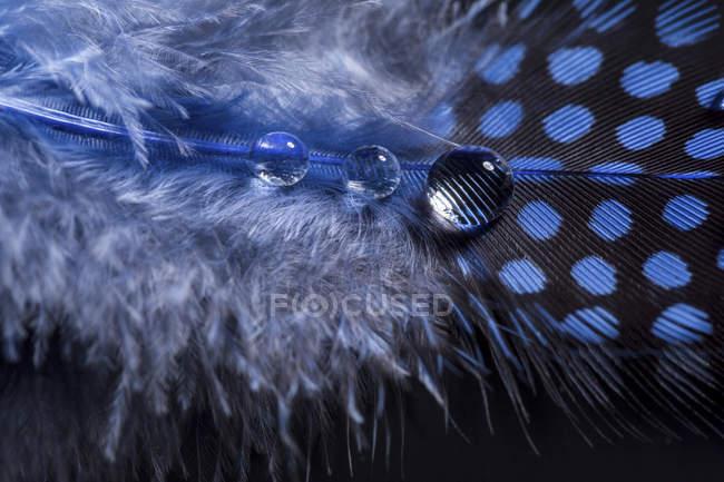 Gouttes de plume et de l'eau bleues, gros plan — Photo de stock