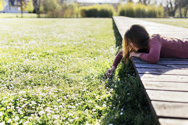 Girl lying on boardwalk and picking daisies from green meadow — Stock Photo