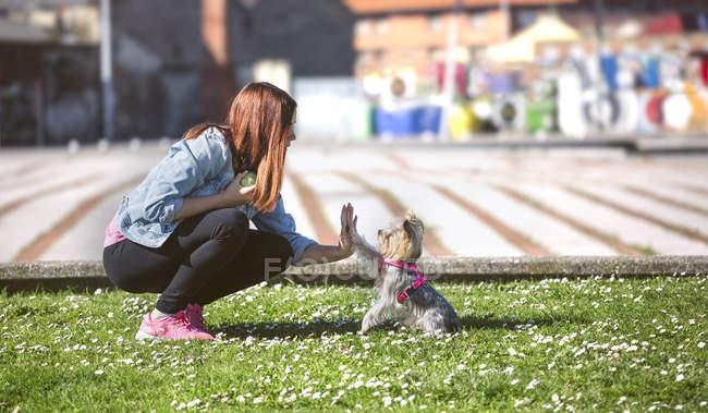 Young woman playing with her Yorkshire Terrier on a meadow — Stock Photo