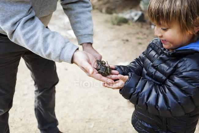 Батько, показуючи його маленький син на Жаба сидить на руці — стокове фото