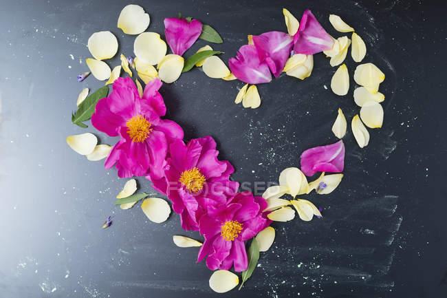 Pfingstrose und Rosenblätter in Herzform — Stockfoto