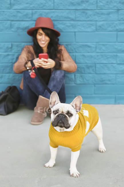 Портрет французского бульдога в жёлтом вязаном свитере с владельцем на заднем плане — стоковое фото