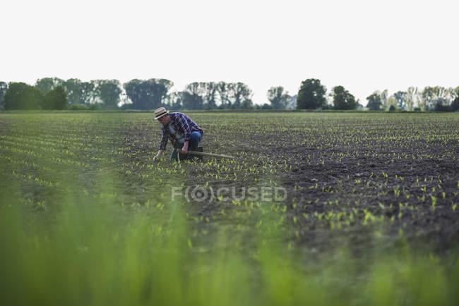 Landwirt in einem Feld, die Ernte zu prüfen — Stockfoto