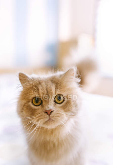 Portrait of light brown cat on bed — Stock Photo